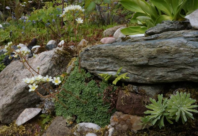 Recycled Concrete Forum Topic North American Rock Garden Society