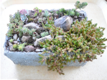 plant trough made from a fish box