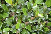 Salix B ? Tromso BG 2