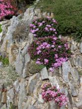 garden of Martin Brejník