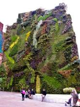 Wall Garden Madrid