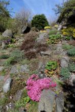Zdenek Zvolanek garden