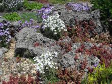 Tufa Garden