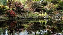 Lower Pond